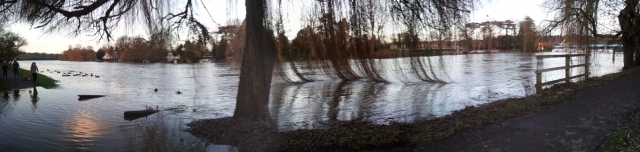 Willows in Winter B