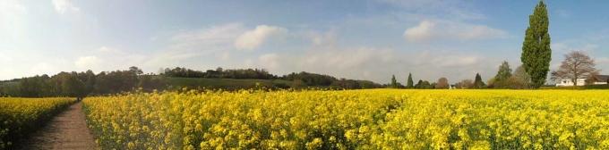 VIEW  from my bike - yellow field 23.4.14