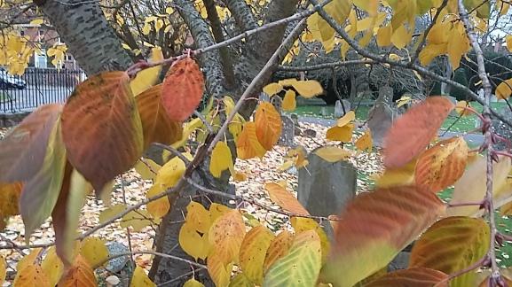 marlow-leaves-2